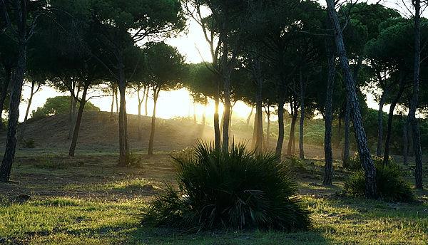 Morgenstimmung im Pinar