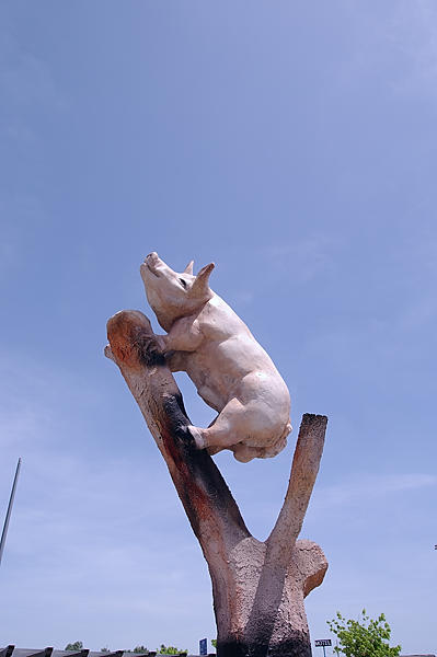 Schweinehitze!