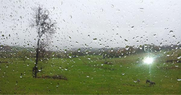 Pferde im Regen~ oder doch nur Schauer?