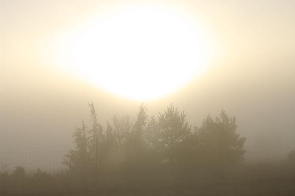 Sonnenaufgang durch Nebel