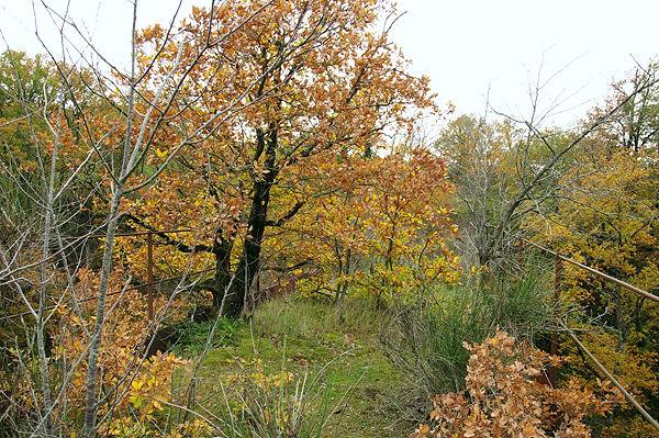 . . . Moos, Gras, jede Menge Büsche und Bäume . . .