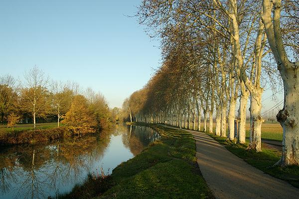 Morgensonne am Canal du Midi