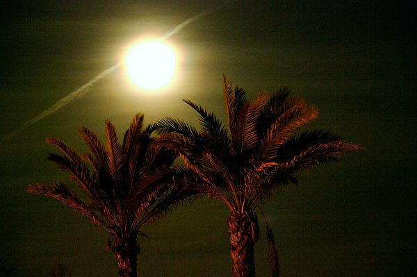 Mond über Palmen