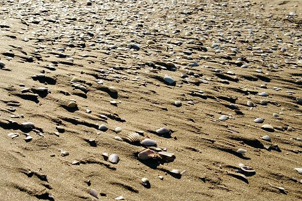 . . . jedes Müschelchen mit einem Keil aus Sand hinterlegt . . .