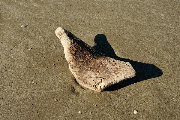 . . . ein Stück Holz wird zur Skulptur . . .