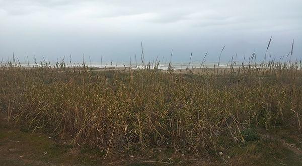 . . . nochmal Schilfhalme, dahinter Sand und Brandung . . .