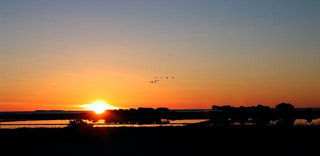 Sonnenaufgang ~ die frühen Vögel . . .