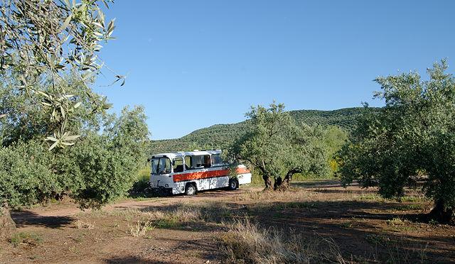 Übernachtung im Olivenhain