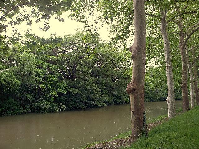 Allee auf der einen, Wildwuchs auf der anderen Seite des Canals