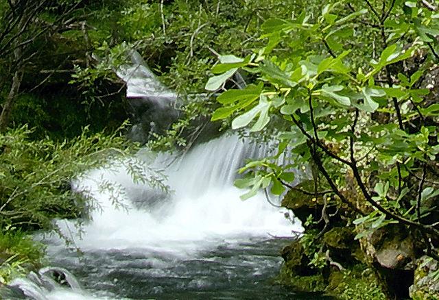 . . . rauschendes Wasser und (ver)wilde(rte) Feigenbäume . . .