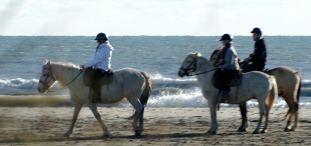 Camargue-Pferde . . .