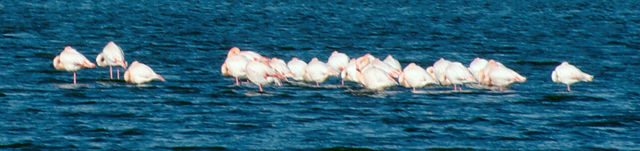 . . . mit rosa Flamingos . . .