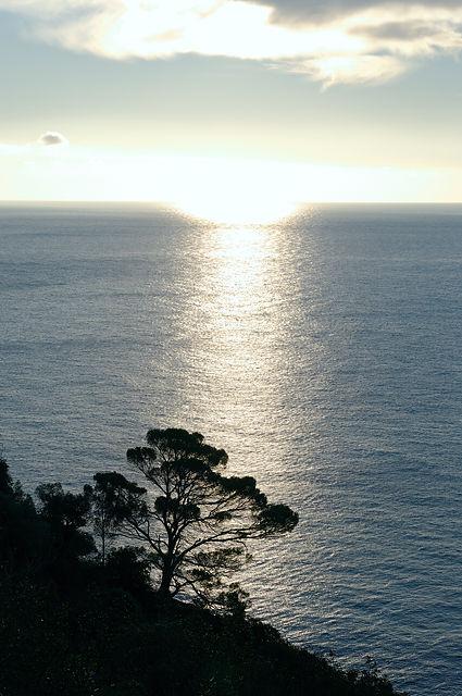das Licht auf dem  Meer und die Pinie . . .