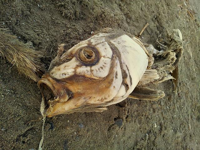 Der beißt nimmer ~ Fundstück am Strand