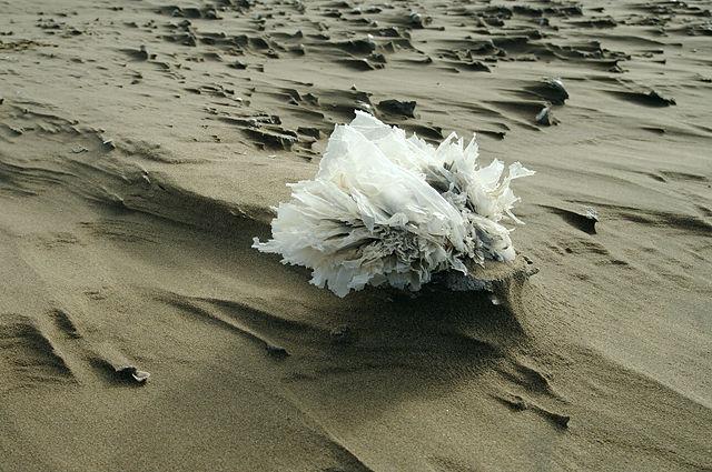 eine Blume aus Müll ~ Plastikfolie