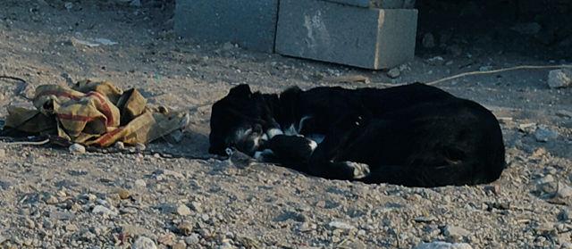 der andalusische Hund ~ nach halber Nacht kläffen läßt sichs gut ruhn!