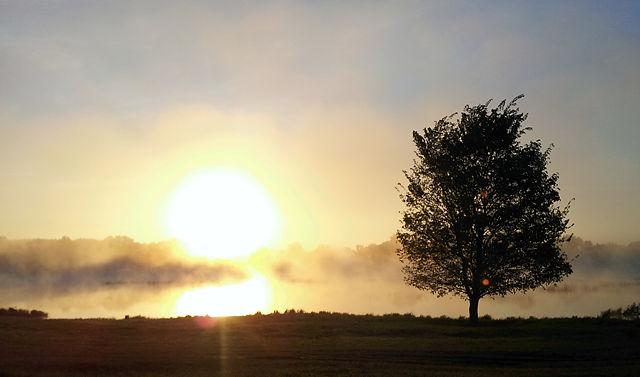 Morgennebel über der Saône I