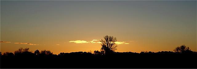 hinter diesem Baum wird gleich die Sonne aufgehen ;)