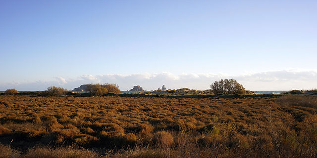Aiguamolls ~ Moor hinter dem Strand