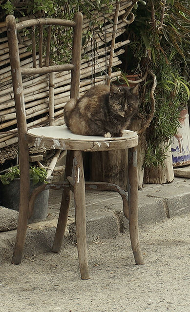 tarnfarben ~ und ein Ast wiederholt die Form des Katzenkopfs