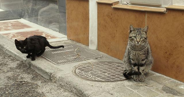 und weil das so schön ist ~ noch mehr Katzen