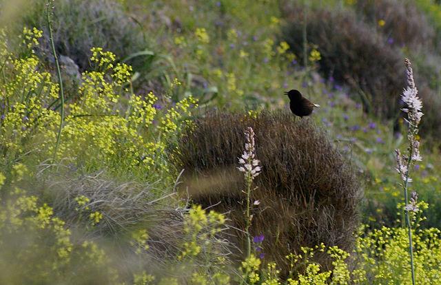 sidecar ~ der frühe Vogel