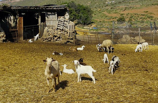 Wanderung das Tal hinauf ~ vorbei an einer Ziegenherde