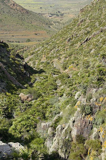 Auf halber Strecke: Blick zurück und hinab  im Barranco de Requena