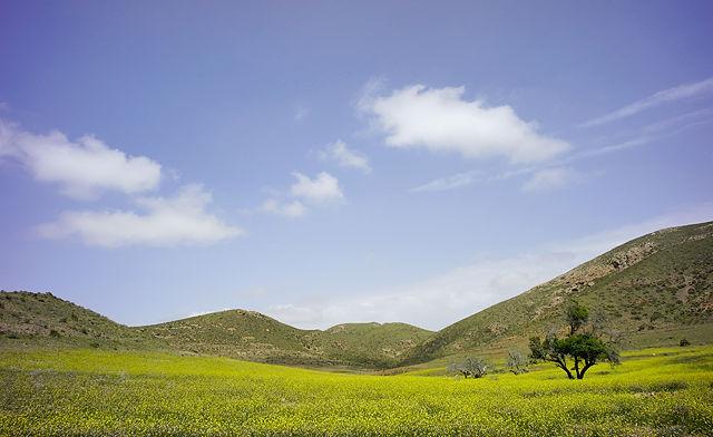 das Tal in explodierendem Grün und Bunt