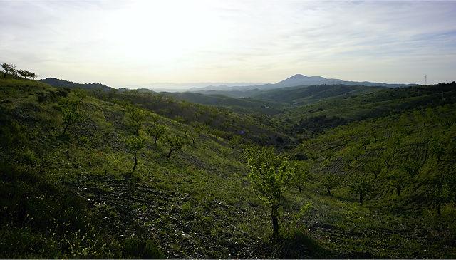 Sierra de Las Estancias ~ Morgenlicht mit Mandelbäumchen