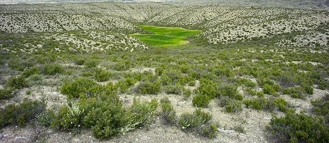 Land Art ~ Getreidefeld im Kalkgebirge I