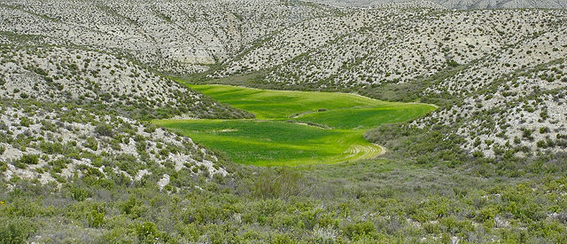 Land Art ~ Getreidefeld im Kalkgebirge II