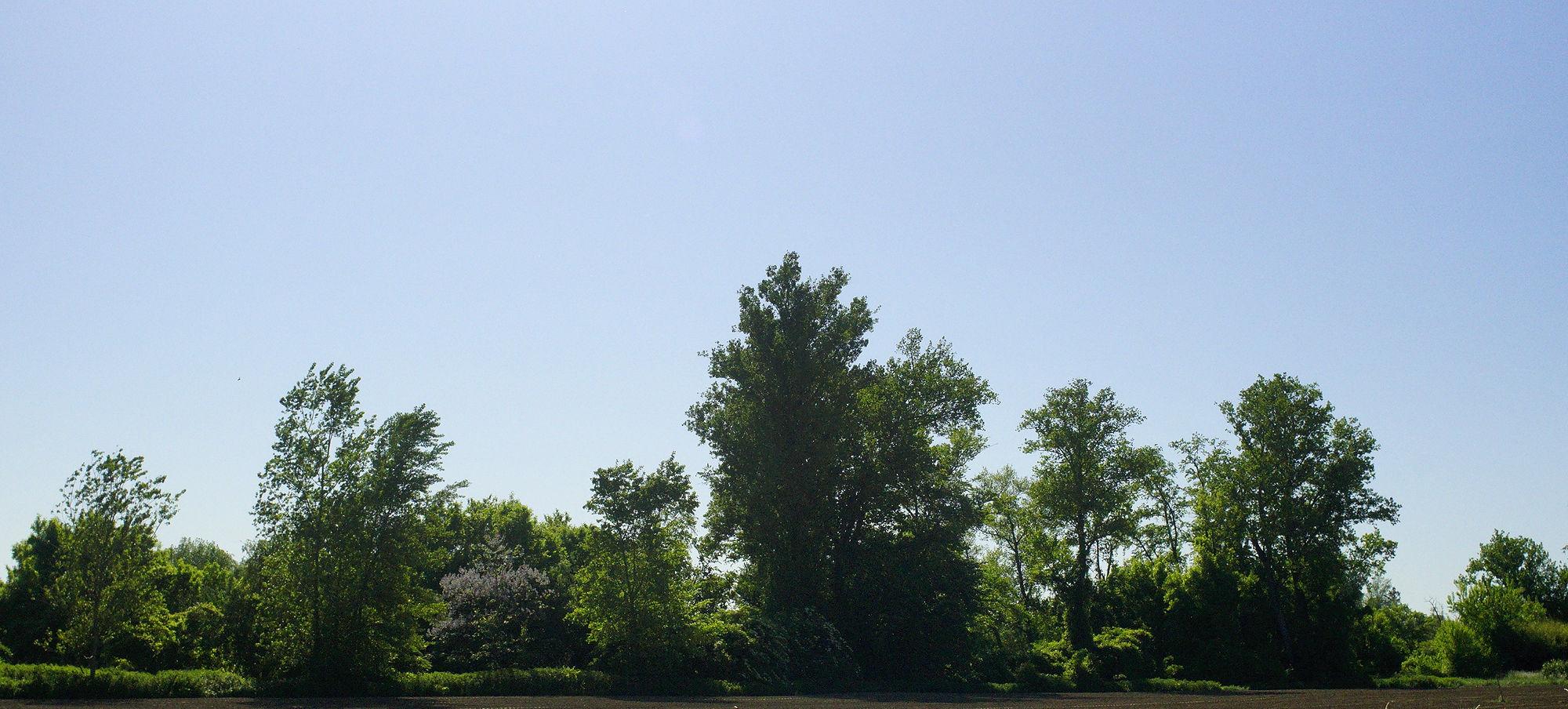 * Sichtschutz für die Garonne ~ eine Wand aus Bäumen *