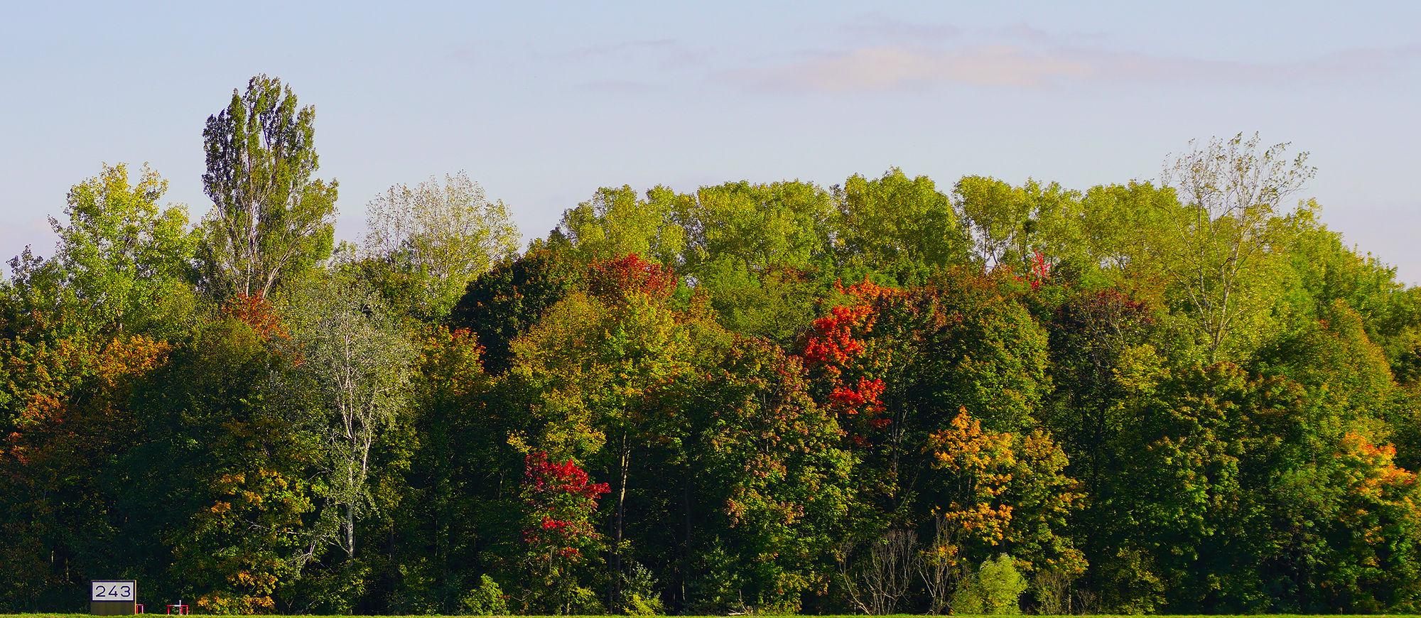 * Herbst am Rhein, km 243 *
