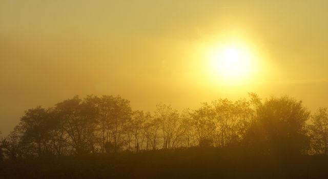 goldener Herbst ~ heimatlicher Sonnenuntergang III