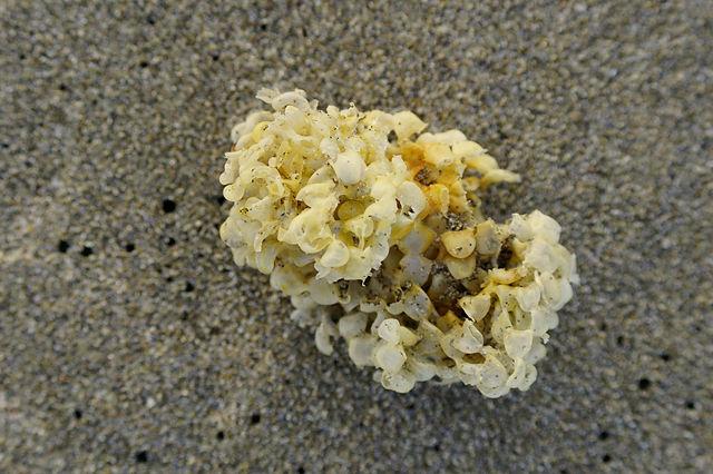 das heutige Bilderrätsel: Fundstück am Strand ~ was das wohl sein mag?