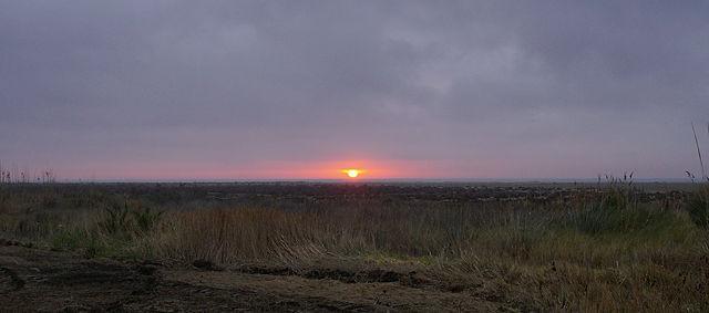 Kurzes Gastspiel am Morgen ~ eine Sonnenbreite und schwupp, wieder weg :(