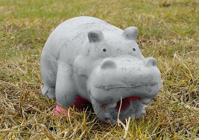 Näher rangepirscht ~ Hippopotamus im Ebro-Delta!
