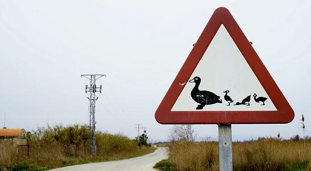 Achtung! hier könnten Entenmamis mit noch tapsigem Nachwuchs kreuzen . . .