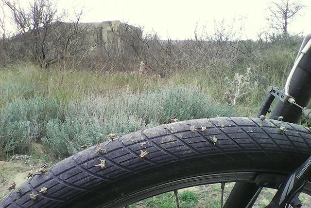 die Reifen voller Dornen