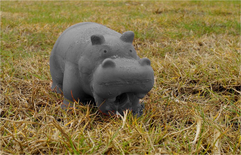 Hippopotamus im Ebro-Delta!
