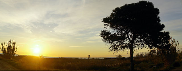 'Wildnis' zwischen Canet und Port de Sagunt