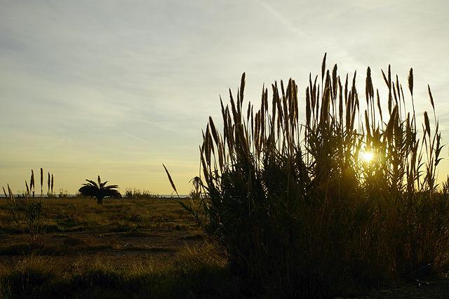 'Wildnis' dazwischen ~ Pinien, Palmen, Schilf