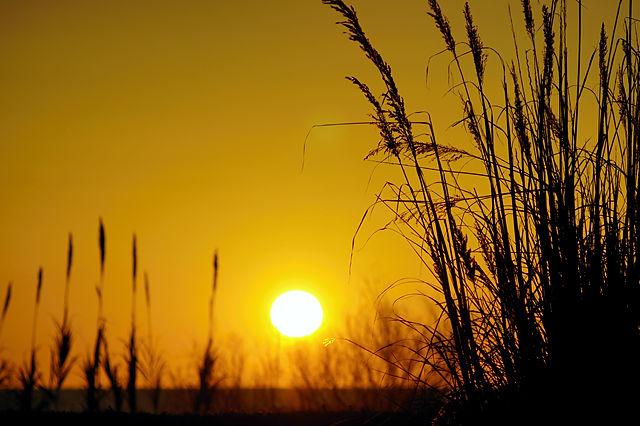 Schilf und Sonne ~ so stehn wir gerne, der alte Herr Magirus und der alte Herr Gutmann