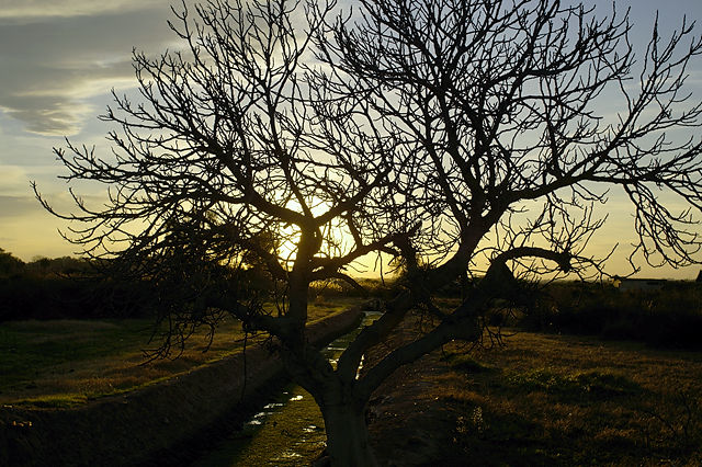 Abendlicht, ein paar Schritte im Hinterland
