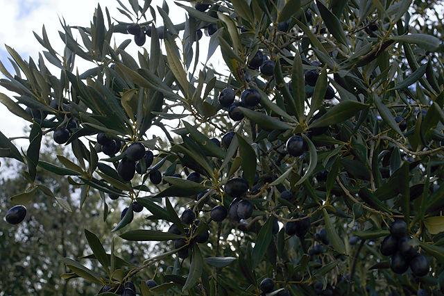 La Morruda ~ immer noch fruchtbar, und wie!