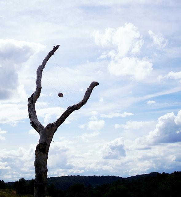 nochmal Spinnennetz im Baum mit Bergkristall ~ ein Dreamcatcher