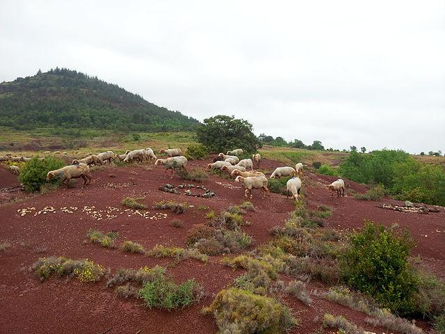 Attacke gegen die Ewigkeit ~ Schafe über die  Ruffes