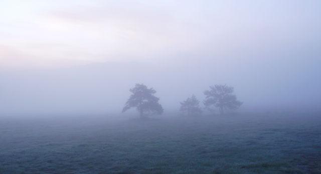 mehr Nebel, die Bäume im Hintergrund ~ verschwunden