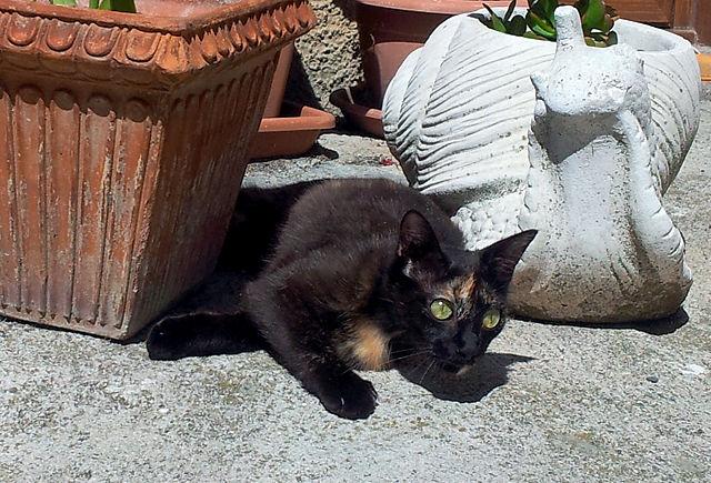 Katze streicheln! :) weckt Erinnerungen an Schoggi! ~ nur der Fleck ist auf der anderen Seite des Kopfes, und sie ist ein wenig schmaler . . .